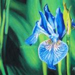 Iris au pastel sec
