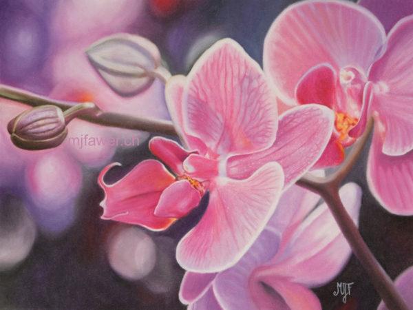 Orchidée au pastel sec