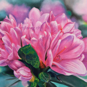 Rhododendrons au pastel sec