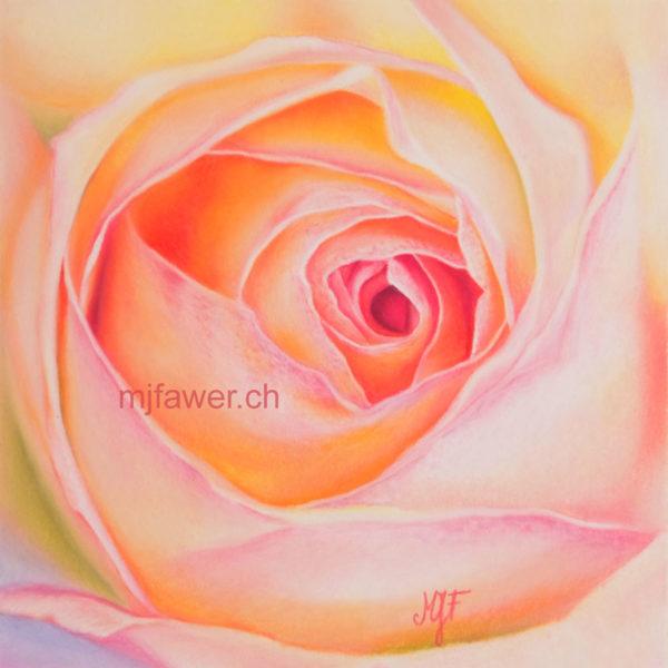 Rose arc-en-ciel au pastel sec