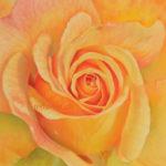 Rose jaune au pastel sec