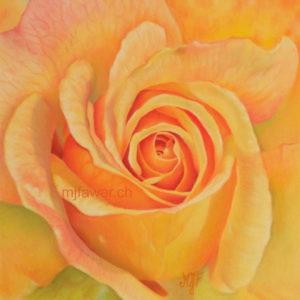 Roses arc-en-ciel