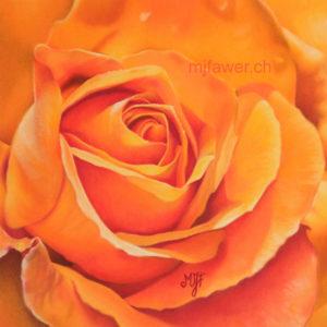 Rose orange au pastel sec