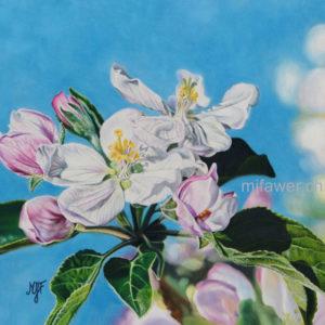 Fleurs de pommier au pastel sec