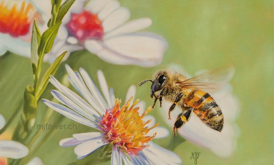 L'abeille et les asters au pastel sec