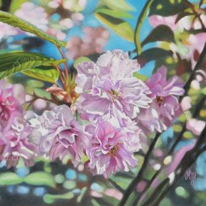 Cerisier sauvage au pastel sec