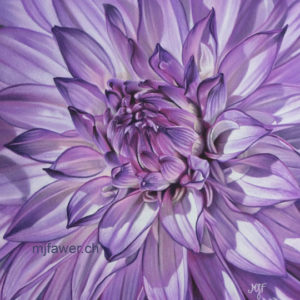 Dahlia violet, pastel sec