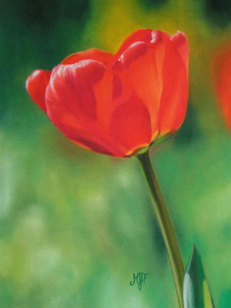 Tulipe au pastel sec